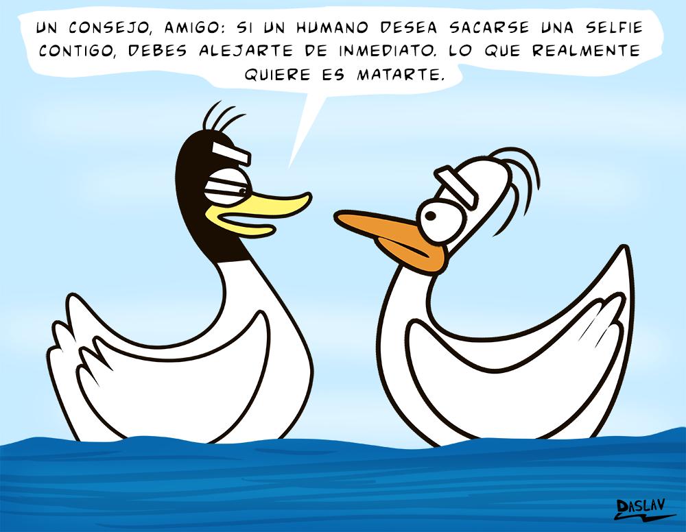 Nueva Viñeta: Consejo de Cisnes
