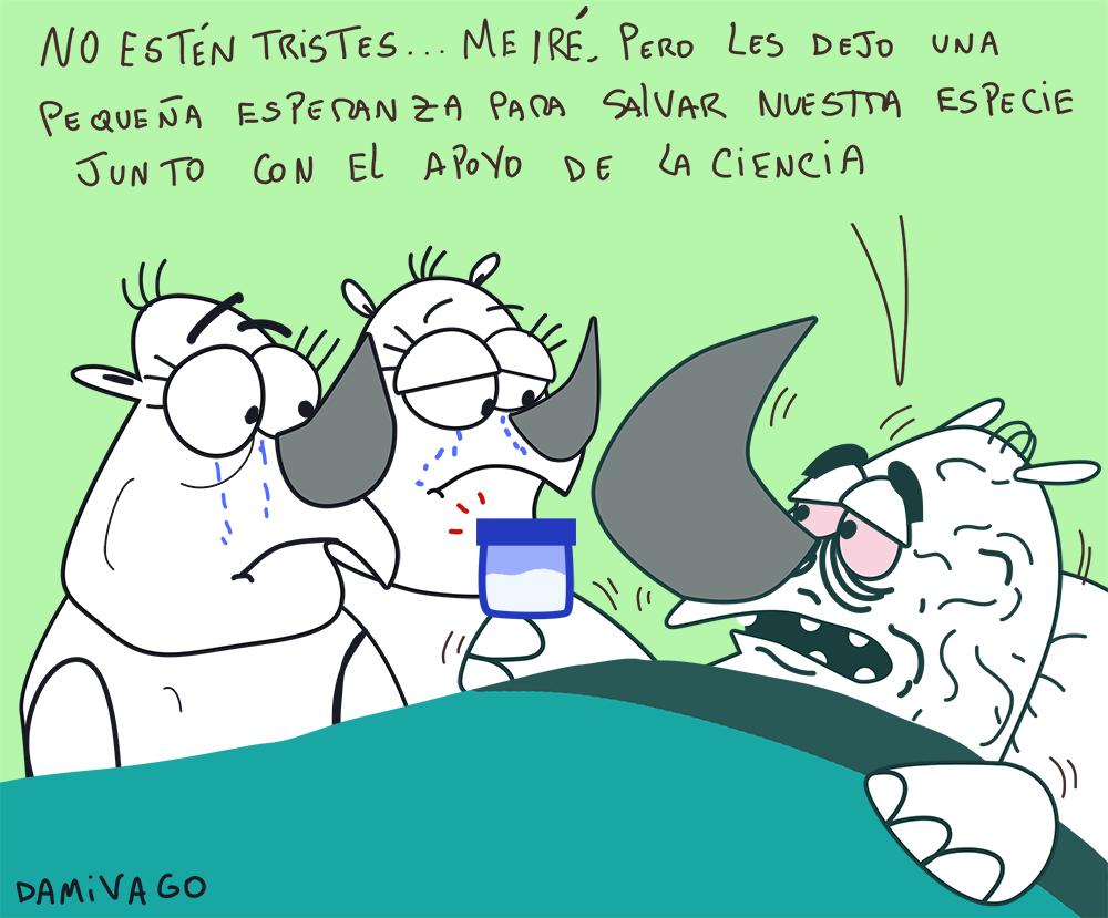 Damivago Nº 794: Rinoceronte Blanco 2