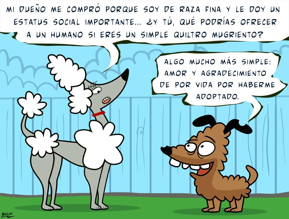 Viñeta: Raza Fina vs Quiltro