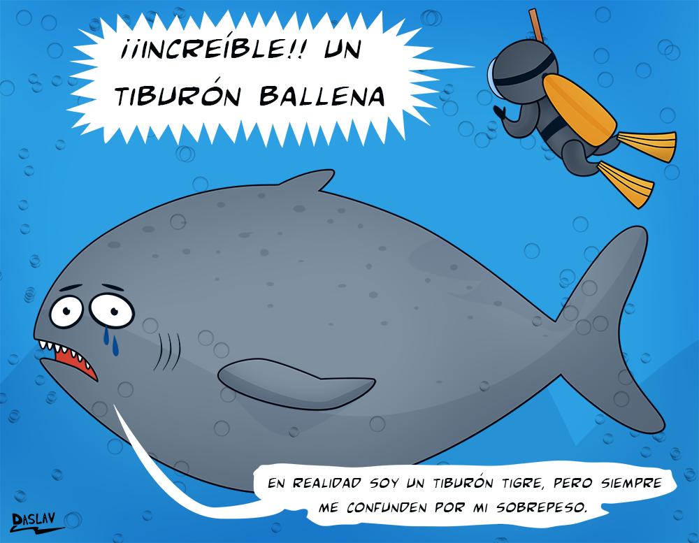 Viñeta:  Tiburón Ballena